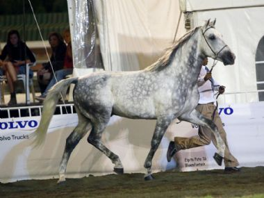 Michmar Franco - Traditional Supreme<br>