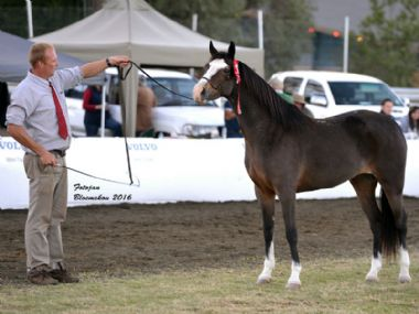 Opstaan Once Again - Traditional Supreme<br>