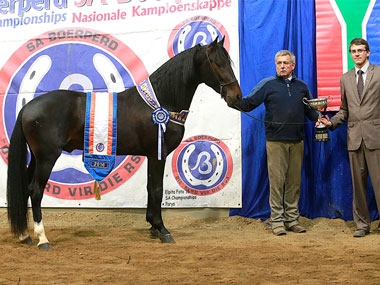WENNERS JEEP - Traditional Supreme Champion Stallion<br>