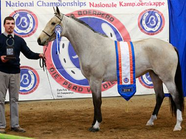 JANIC LEXUS  - Universal Junior Champion Mare<br>