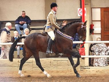 ROOIGRAS SPEND A POUND  - Universal Champion 3 Gaited Riding Horse under 5<br>