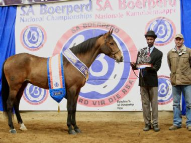 LANG-CAREL FRIK - Traditional Supreme Champion Gelding<br>