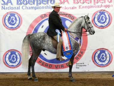 MICHMAR HASTA  - Traditional Champion 3 Gaited Show Horse <br>