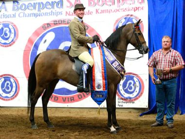 ROOIGRAS SATYN - Traditional Champion 3 Gaited Riding Horse 5 years and older <br>