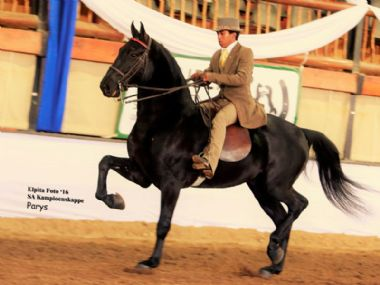 VOORSLAG MANDOZA  - Traditional Champion 3 Gaited Show Horse under 5 years <br>