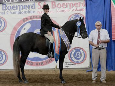 AUGRABIESE VALLE  - Traditional Champion 3 Gaited Riding Horse under 5 years <br>