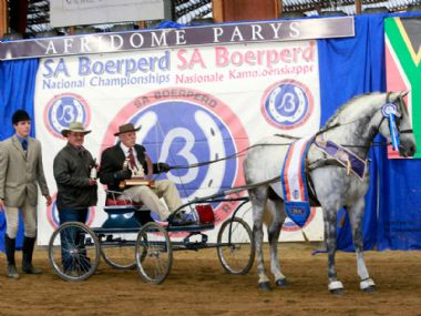 MICHMAR FRANCO - Universal Champion Single Harness Horse <br>