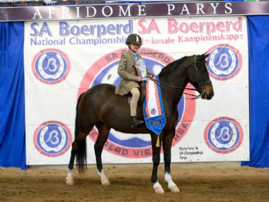 VLAMPIES DINAMIKA  - Traditional 3 Gaited Childrens Riding Horse
