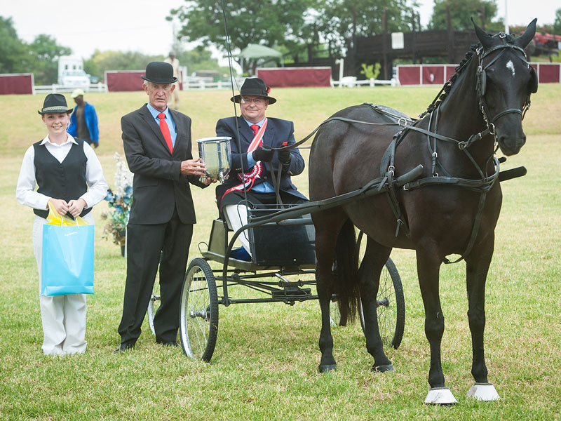 Rooigras Sierlik - INTER BREED SUPREME CHAMPION SINGLE HARNESS HORSE<br>