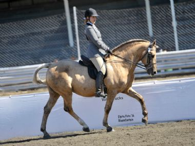 Madeira Opsaal - Universal 3 Gaited Champion<br>