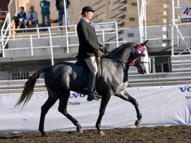 Maak 'n Plan Hugenoot - Universal 3 Gaited Champion<br>