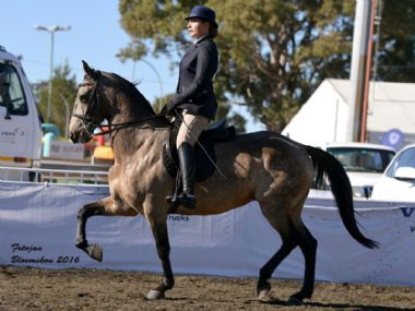 Lodikta Toffie - Traditional 3 Gaited<br>