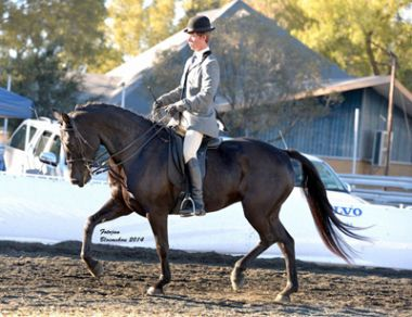 Hoefstraal Kasjet - Universal Champion 3 Gaited Riding Horse Under 5 Years, Rider: J. du Plessis, Owner: Hoefstraal Stud