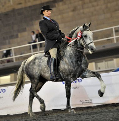 Michmar Franco - Traditional Champion 3 Gaited Riding Horse 5 Years and Older, Rider: M. Louw, Owner: Ansa Stoet