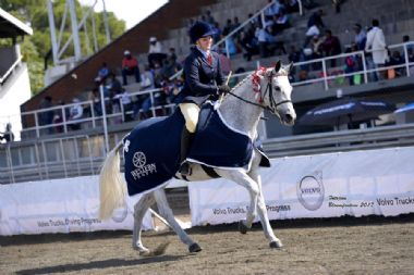 LANG-CAREL WIMPERS - Universal Champion Mare<br>