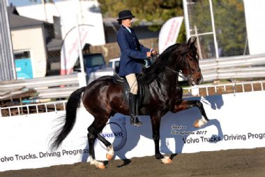 VLAMPIE'S AKASIA - Elite 5 Traditional Champion 3 Gaited Riding Horse Under 5 years<br>