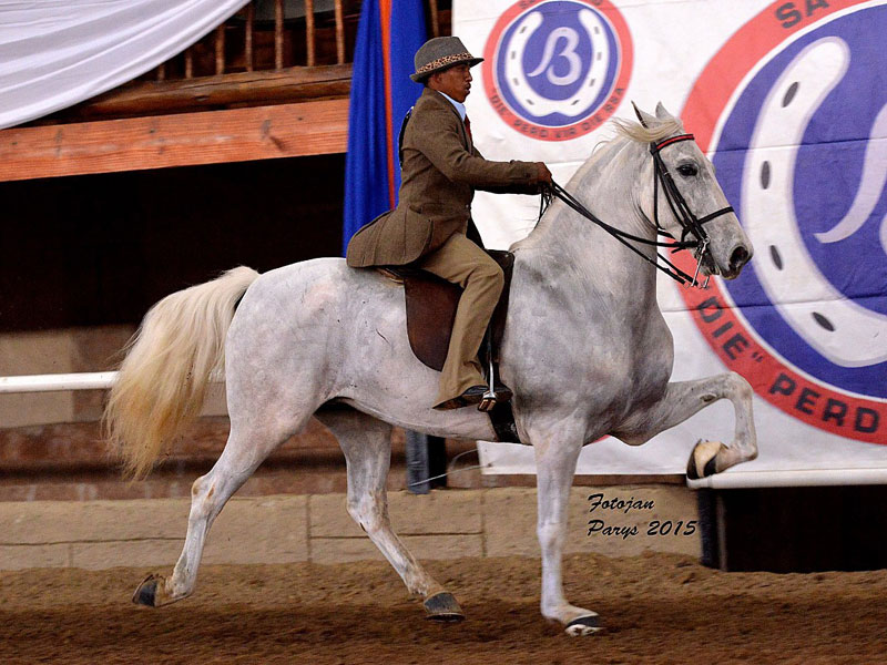 Hessequa Flikker - Tradition Champion 5 Gaited Riding Horse 6 Years and older; Rider: Wilfred Gelderblom; Owner: PWC Ludick, Warden