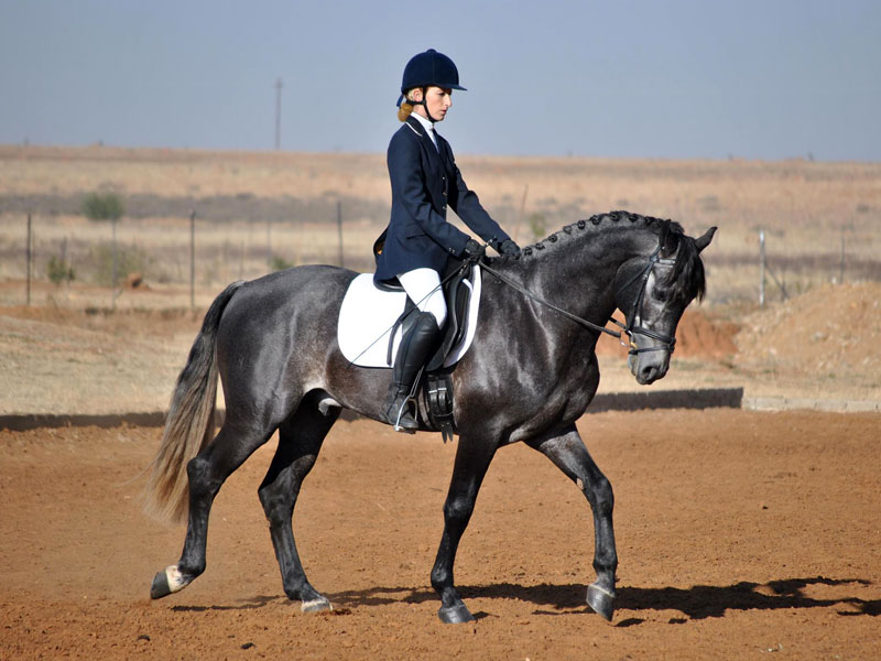 Jurust Impi - Jurust Impi, Rider: Danel Theron, Adult Novice Dressage. Foto by Lizelle Gouws