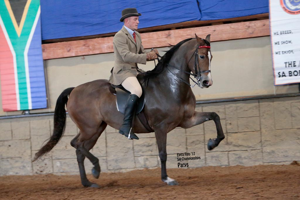 ROOIGRAS SATYN - T- CHAMPION SENIOR MARE<br>