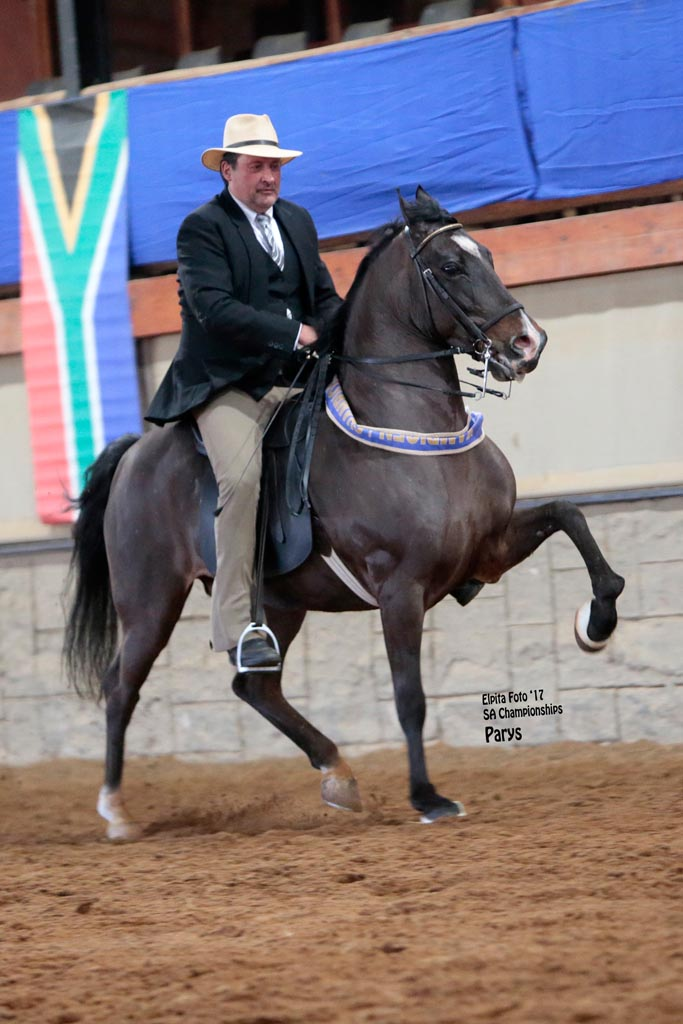 MICHMAR GUSTAV  - T- ELITE 5 - CHAMPION 5-GAITED RIDING HORSE 6 YEARS AND OLDER<br>