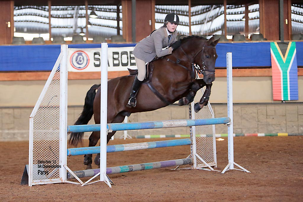 GOUDHOEK WILLEM  - WORKING HUNTER -  80CM (AUTO.CHAMP)<br>