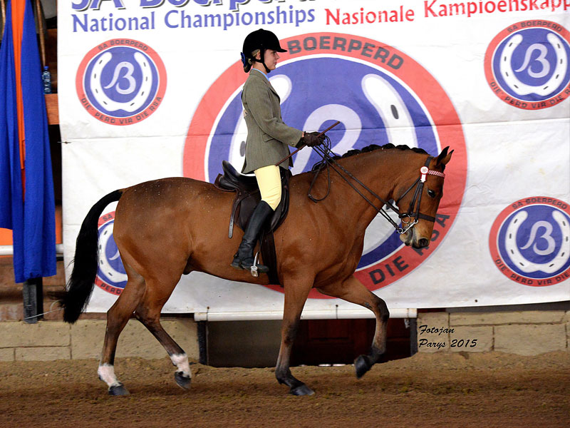 Paardekop Toffie - Universal Champion 3 Gaited Riding Horse 5 Years and older. Rider: Milaine Smit; Owner: Lizelle Smit, Karenpark